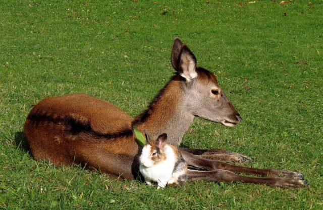 srna zajac zázrivá